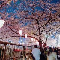 Những địa điểm ngắm hoa anh đào đẹp nhất ở Tokyo