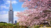 Lưu ngay địa chỉ ngắm hoa anh đào đẹp nhất ở Tokyo