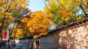 Lưu ngay 4 địa chỉ ngắm lá thu tuyệt nhất tại Seoul