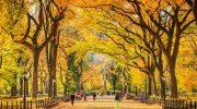 Ngắm sắc thu lãng mạn tại công viên Central Park – New York